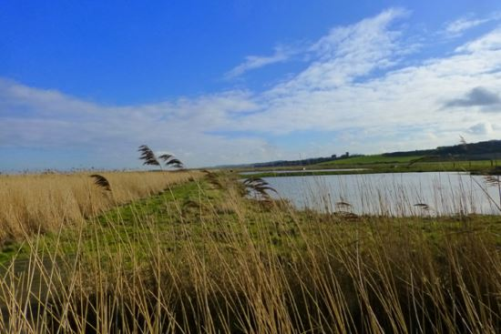 Pope's-Marsh,-Cley-Marshes-credit-Nicky-Talbot