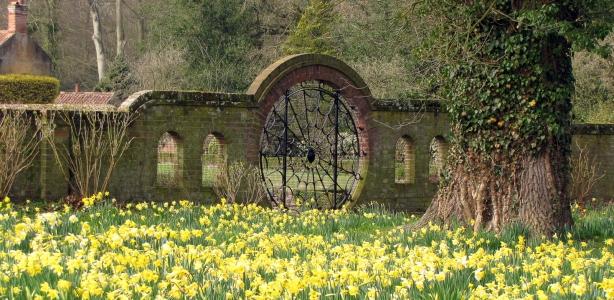 Daffodils_Spider_Gate_Hoveton_Hall_Gardens