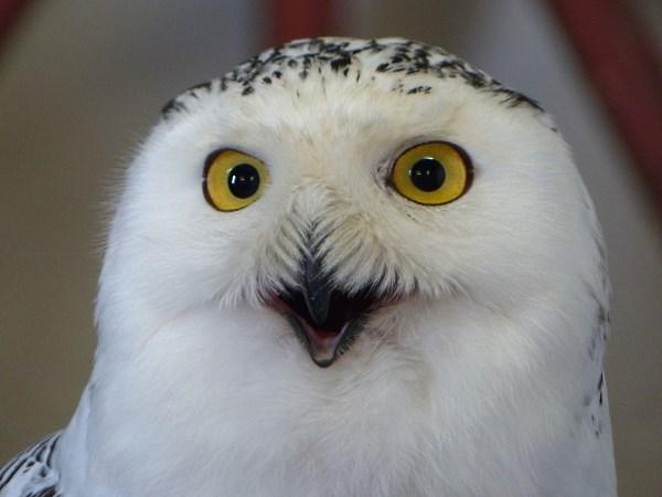 Happisburgh-Owls1