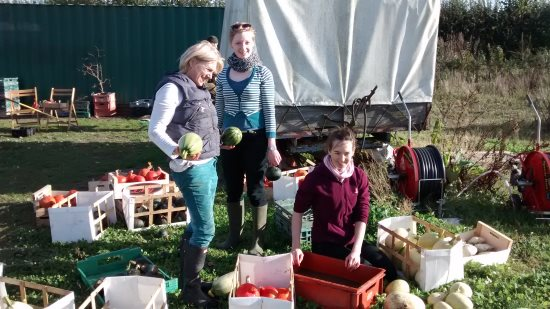 Norwich Farmshare - Packing up the harvest
