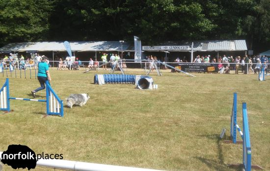 dog course at Norfolk Show