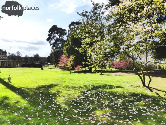 Somerleyton Hall Gardens - blossom on the grass
