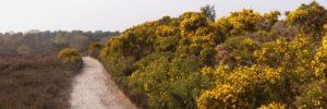 Enjoyable Walk at Dunwich Heath and Beach