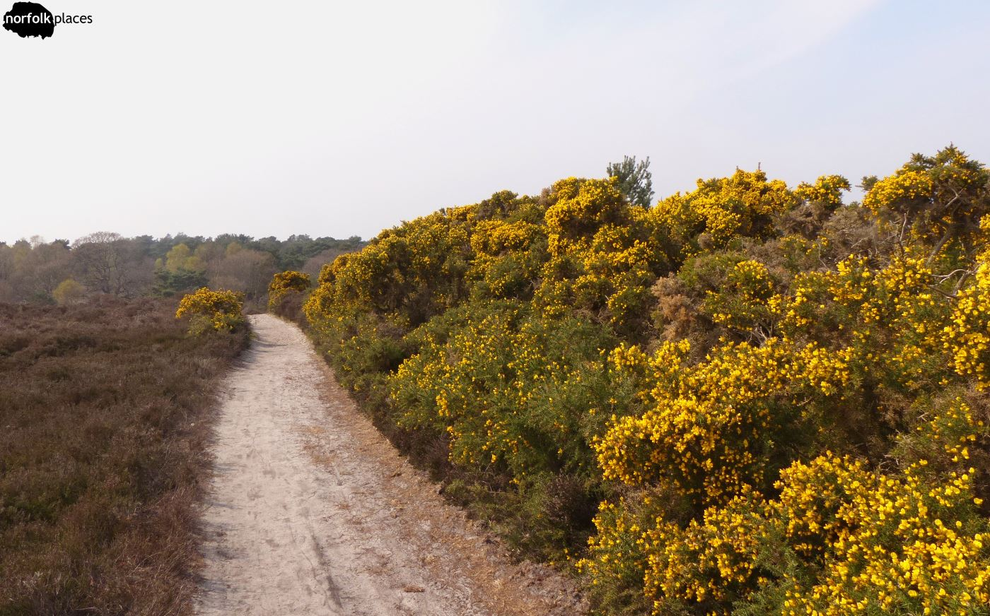 NT Dunwich Heath and Beach
