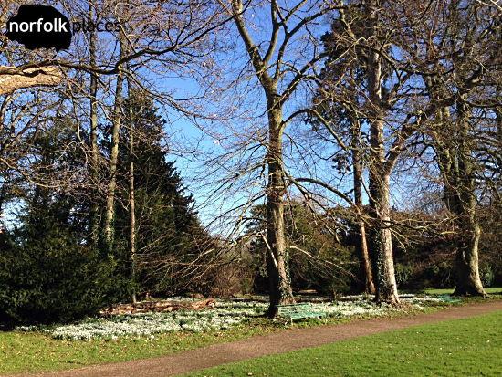 Walsingham snowdrops walk