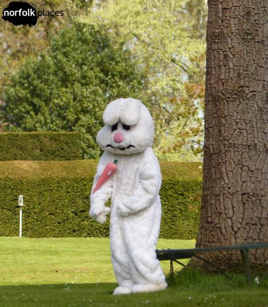 Bunny at Somerleyton