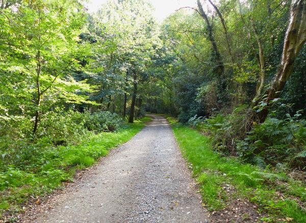 Beeston Regis Heath walk