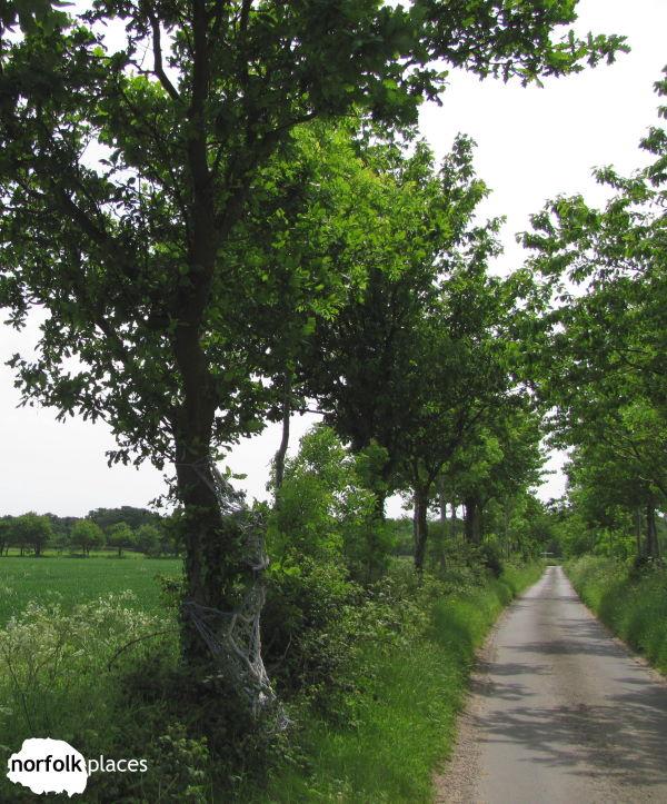 Barton Broad walk Irstead Road