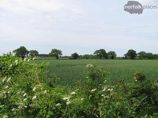 Barton Broad walk, view across a field