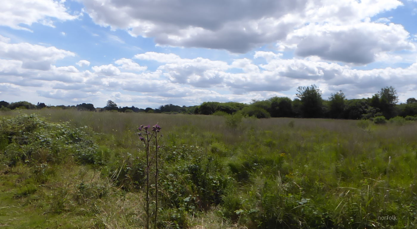 Redgrave and Lopham Fen – Great Fen Trail