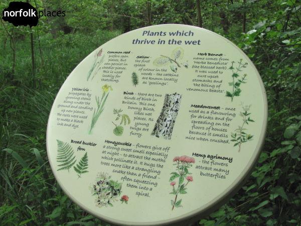 barton-broad identify plants